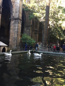 The geese of Barcelona Cathedral