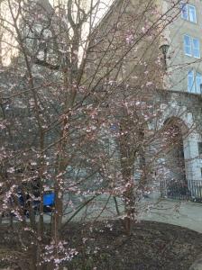 Winter Blossom?